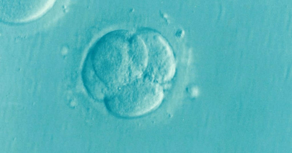 my infertility struggle saved me
